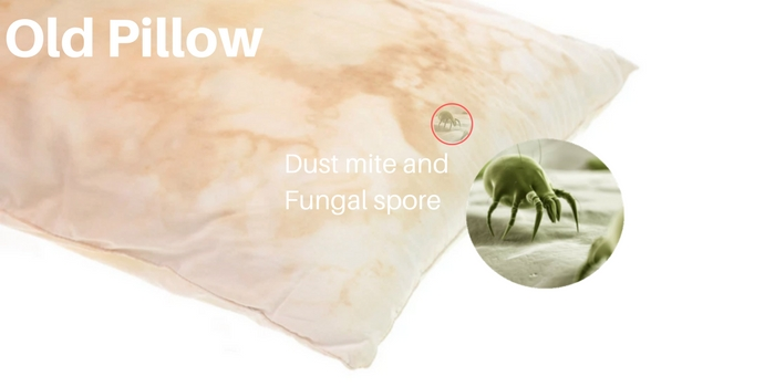 pillow dust mites check