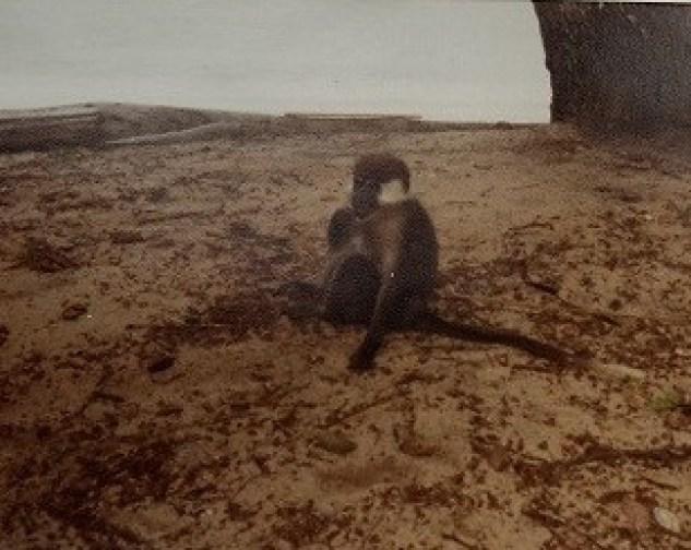 Compagnon de plage au Kérélé