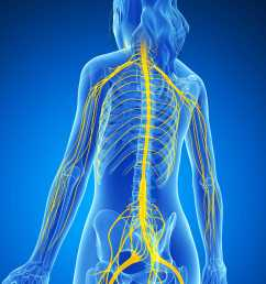 nervous system jpg [ 3750 x 3657 Pixel ]