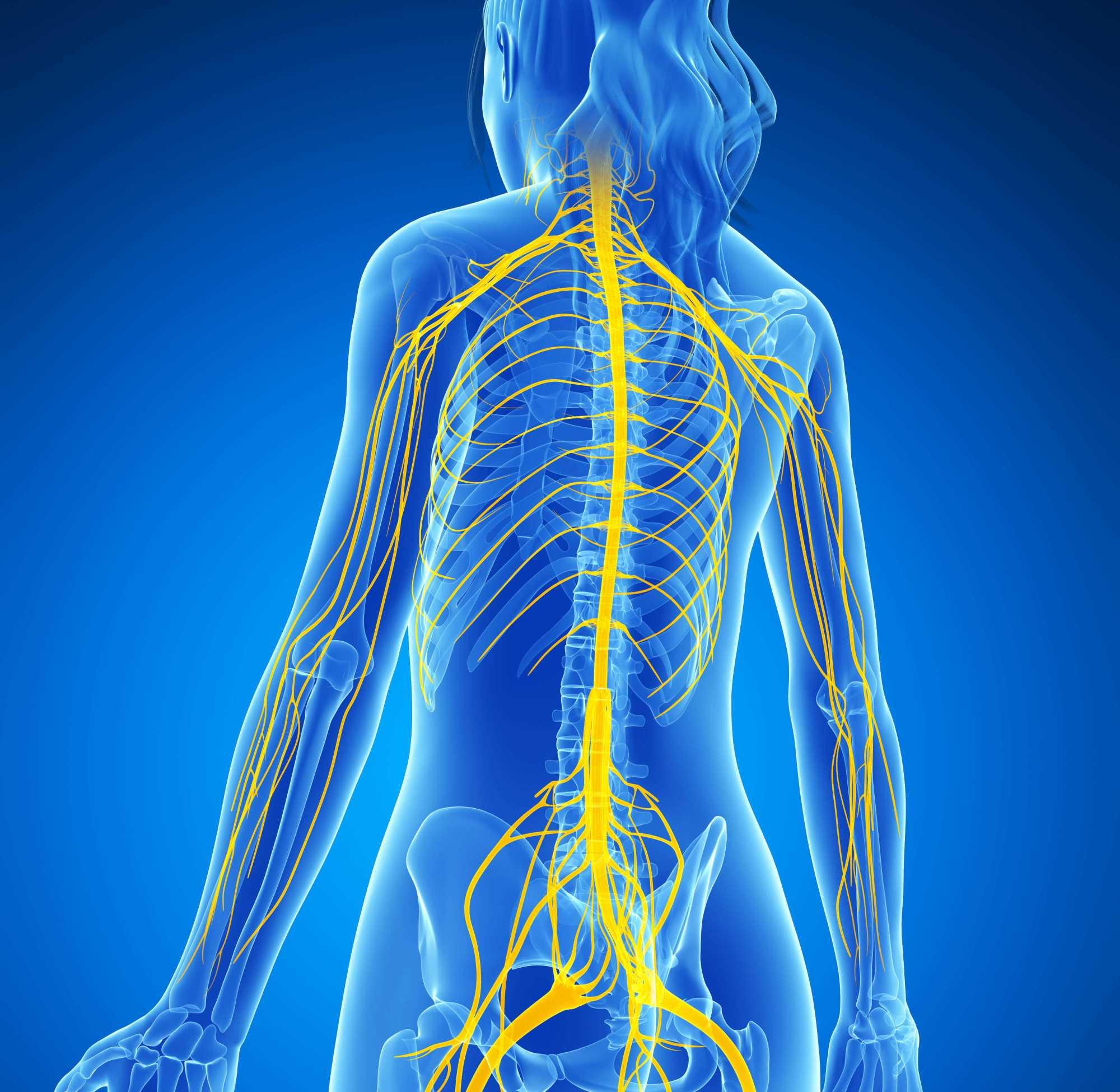 hight resolution of nervous system jpg