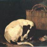 Resani Arcangelo, Cane e sporta