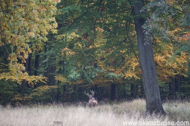 What to do in Denmark in Autumn?