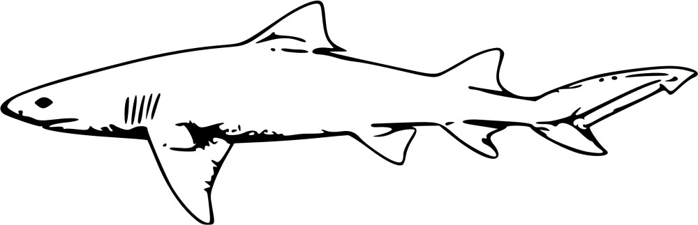 medium resolution of how to create clipart white shark clipart library lemon shark drawing png download