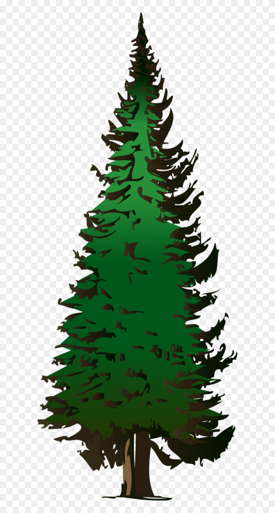 hight resolution of pine tree vector free download pine tree clipart png transparent png