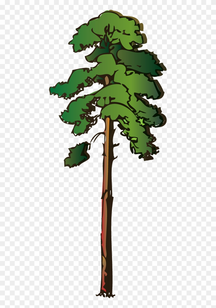 hight resolution of pine tree clipart png red pine tree clipart transparent png