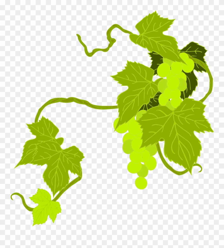 hight resolution of onlinelabels clip art grapes grape leaves clipart png transparent