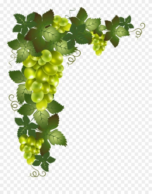 small resolution of grape vine border png transparent grape vine png clipart