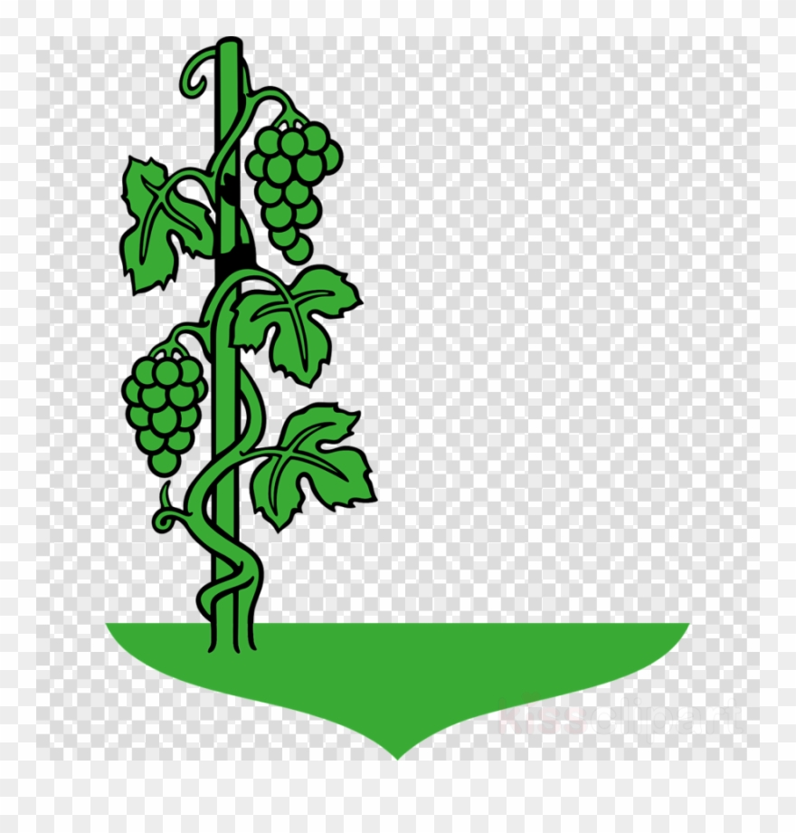 hight resolution of cartoon vine clipart common grape vine clip art cartoon images of grapes plant png