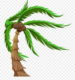 with coconuts transparent png clip art image coconut tree png clipart [ 880 x 1038 Pixel ]