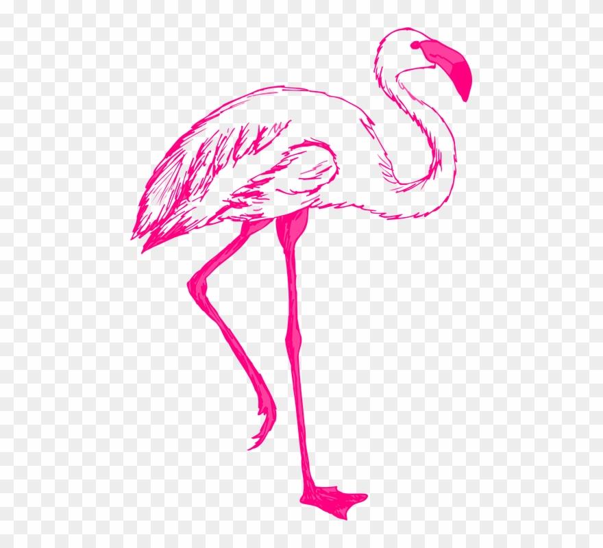 pink flamingo cliparts 17
