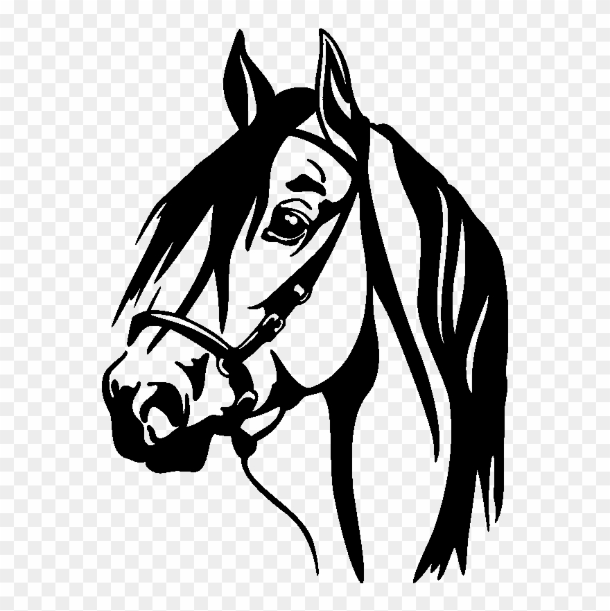 Horse Head Silhouette Png For Kids Horse Decal Clipart 1349157 Pinclipart