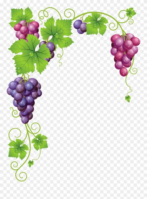 small resolution of grape vine clipart png grape vine frame transparent png