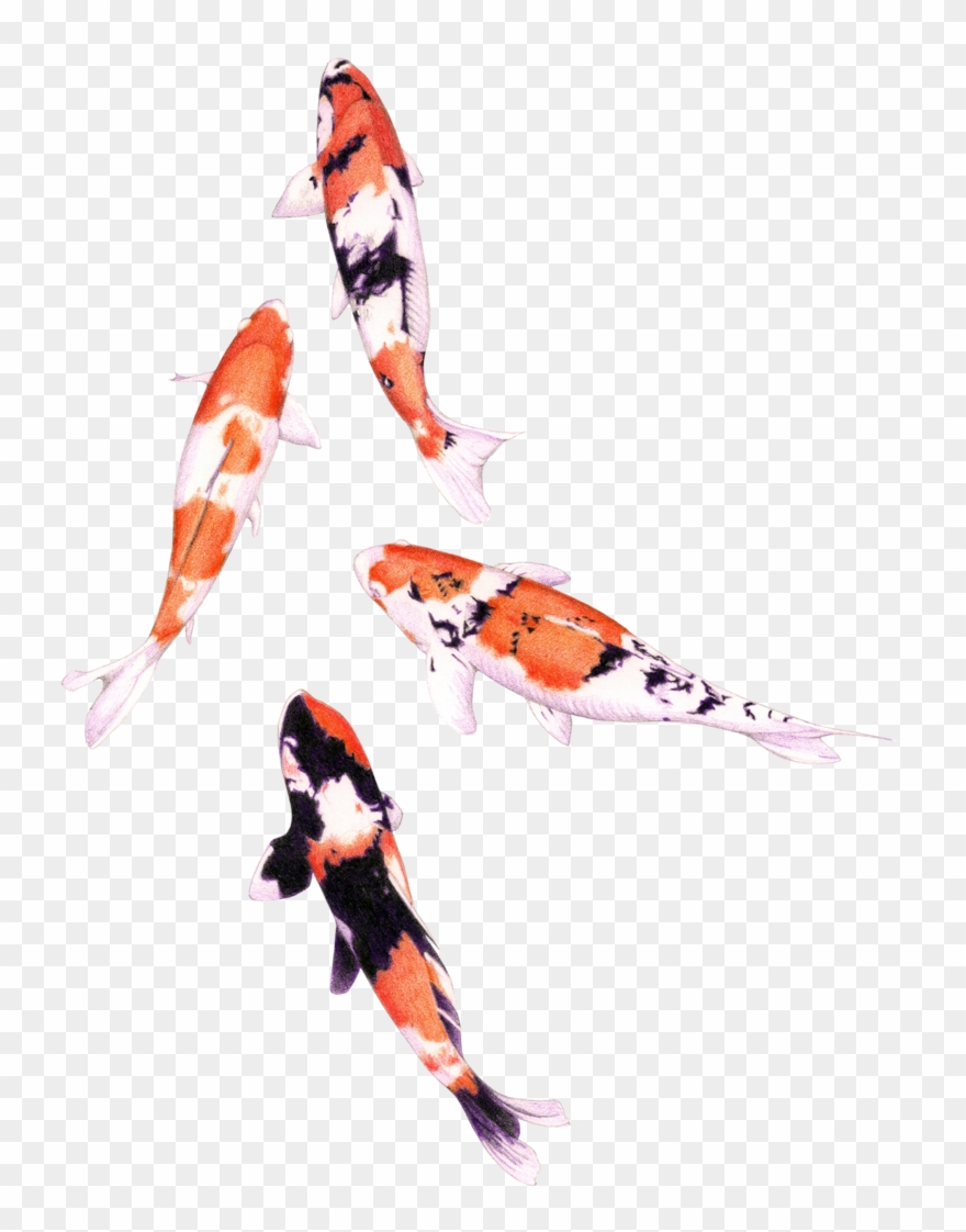 medium resolution of koi fish png graphic royalty free stock png water color fish clipart