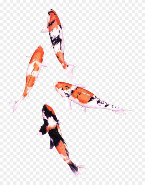 small resolution of koi fish png graphic royalty free stock png water color fish clipart