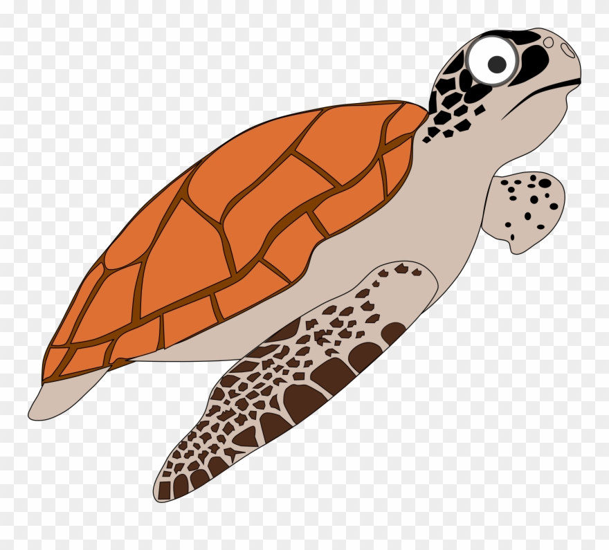 Sea Turtles Clipart Loggerhead Sea Turtle Clipart Png Download 244368 Pinclipart