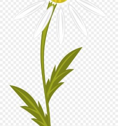 clipart transparent download clipart daisy free on camomile clipart png download [ 880 x 1949 Pixel ]