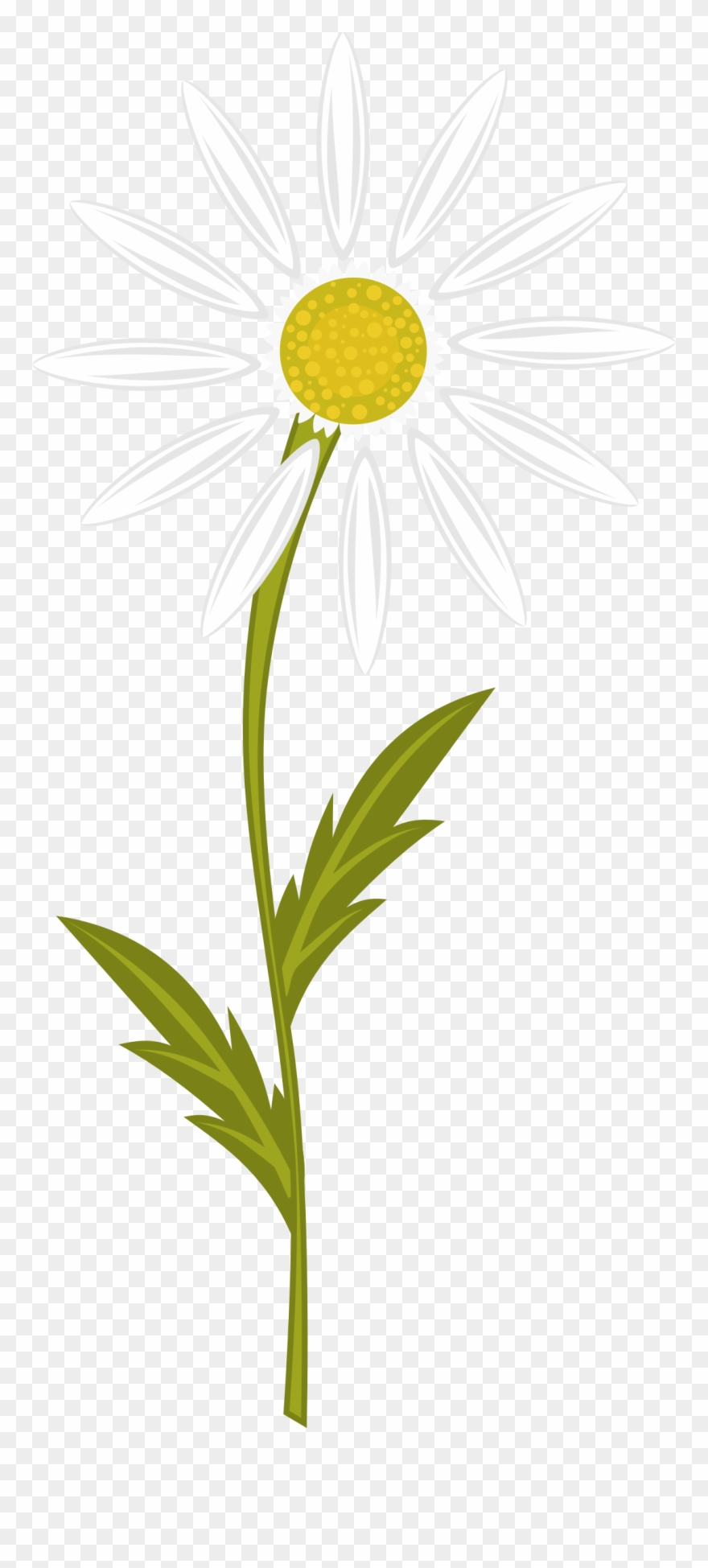 medium resolution of clipart transparent download clipart daisy free on camomile clipart png download