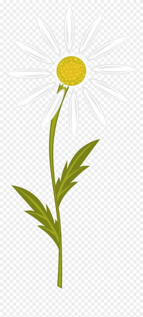small resolution of clipart transparent download clipart daisy free on camomile clipart png download