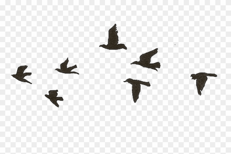 free png download flying