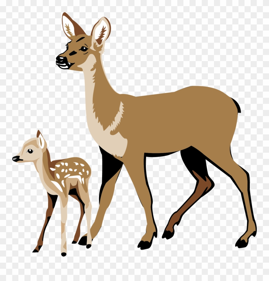 whitetail deer clipart deer