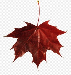 autumn png leaf fall leaves clip art transparent background maple leaf with transparent background [ 880 x 1008 Pixel ]
