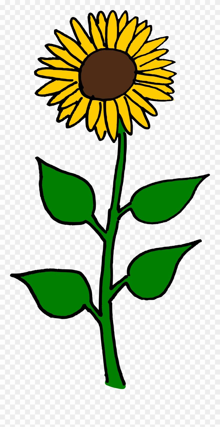 flower clipart sunflower sun