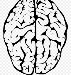 outline of human brain transparent background brain clipart png download [ 880 x 1145 Pixel ]