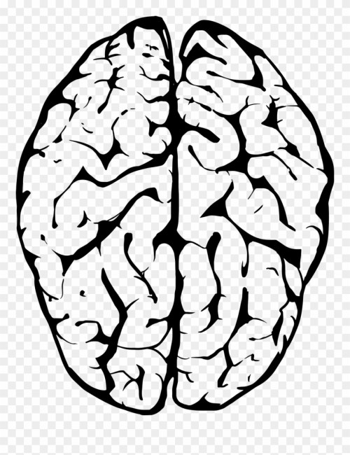 small resolution of outline of human brain transparent background brain clipart png download