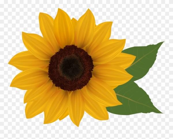 clip art sunflowers - sunflower