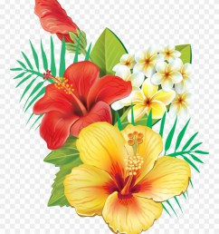 tropical hibiscus flowers clipart [ 880 x 1104 Pixel ]