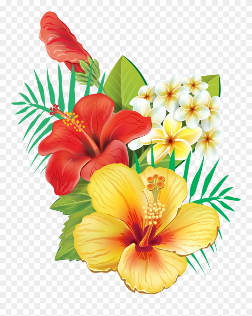 hight resolution of tropical hibiscus flowers clipart