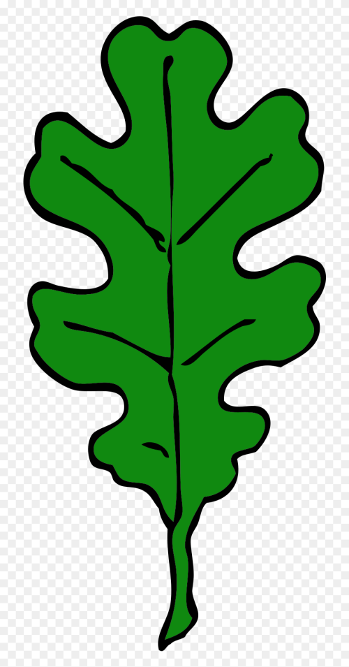 small resolution of forest oak leaf green leaf tree leaves oak red