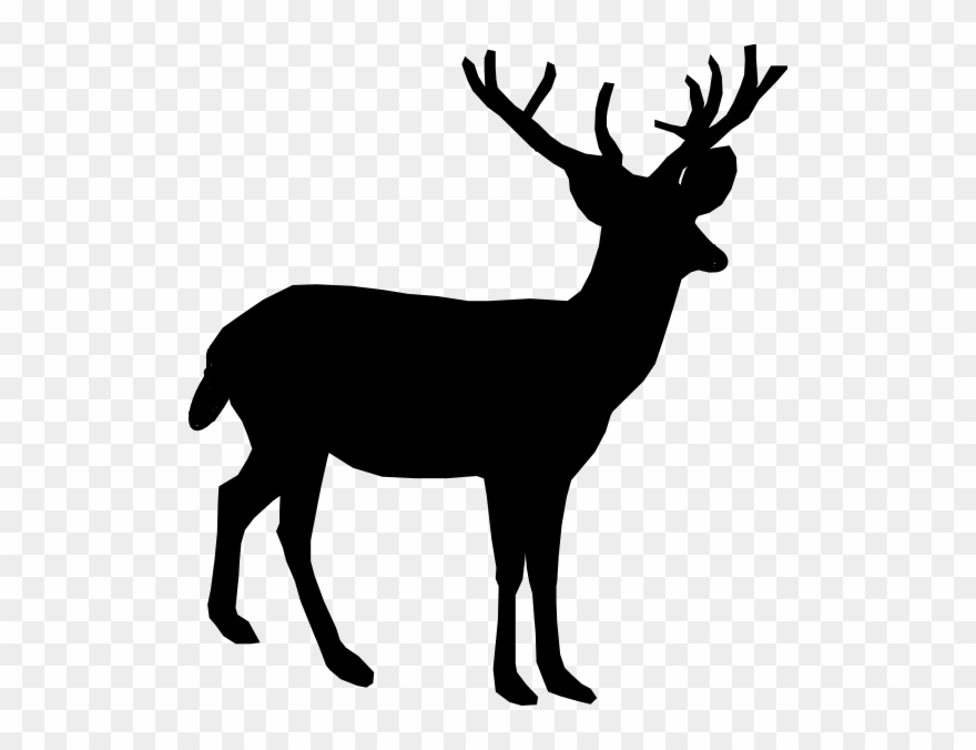 jpg freeuse whitetail deer
