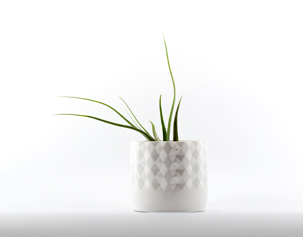 blocks handmade concrete planter styled with air plant