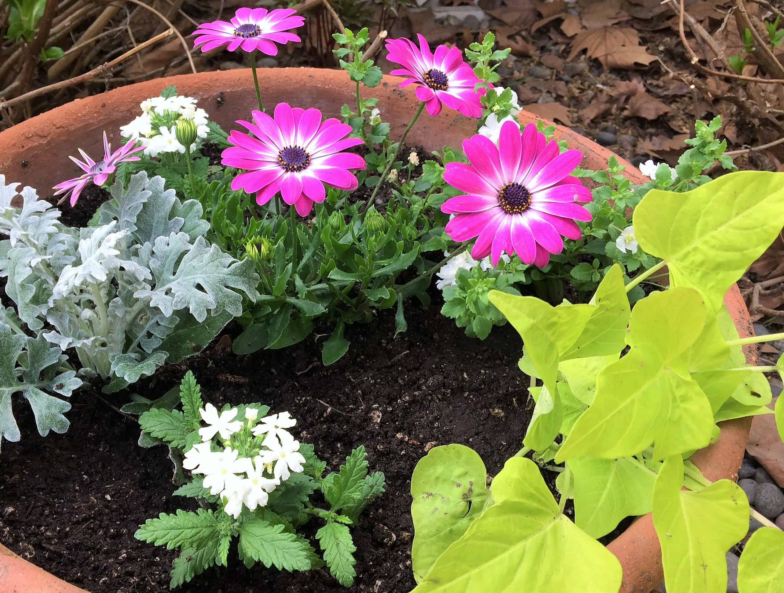3 Steps To Planting Flowers In Pots & 3 Steps To Planting Flowers In Pots - Pinecone Cottage Retreat