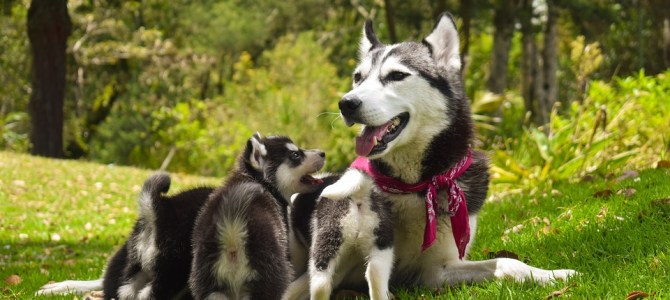 Dog Behavior During And After Birth
