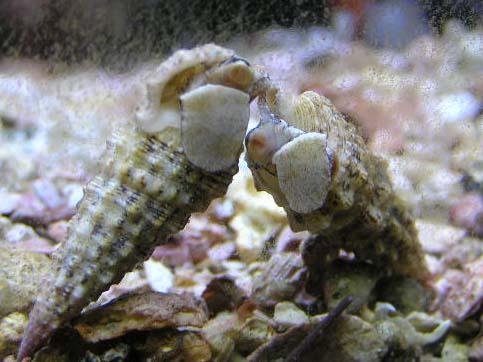 Saltwater aquarium fish photos  Marine tropicals  Pinellas Aquariums