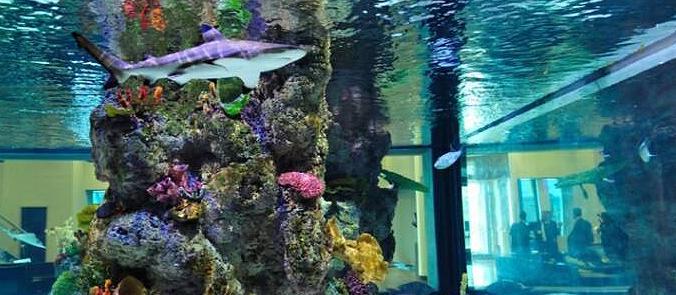 Aquarium Sales  Acrylic Aquariums on Sale Aquarium
