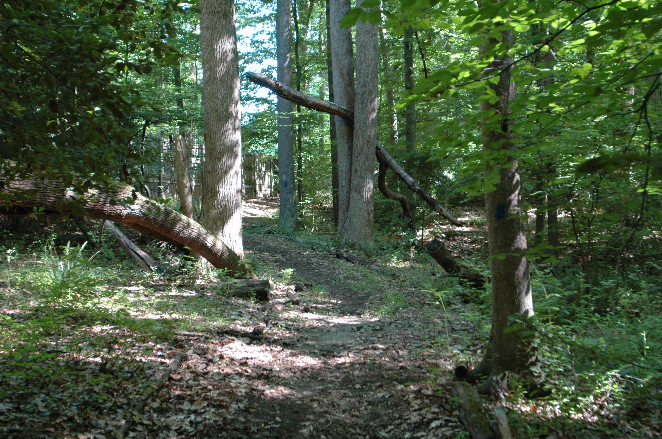 Pine Tree's hiking trail.