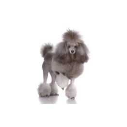 Animal Essences- Poodle, Bichon Frise, Maltese Happy Empowerment