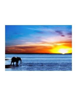 Elephant Higher Realm Attunement