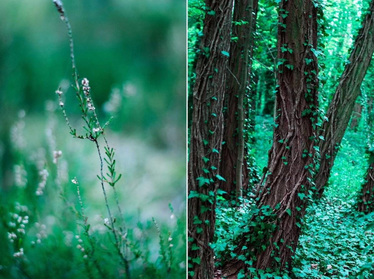 Sława lasy