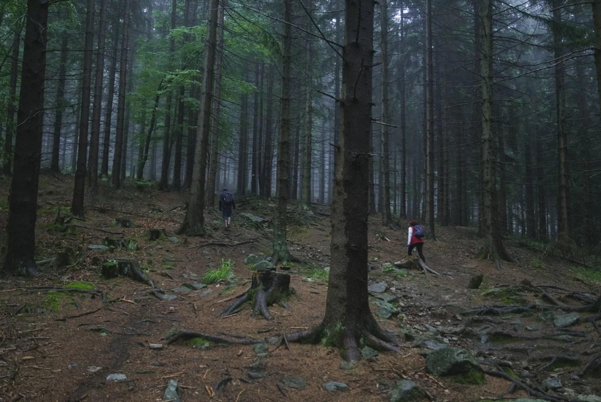śnieżnik szlak, las, natura