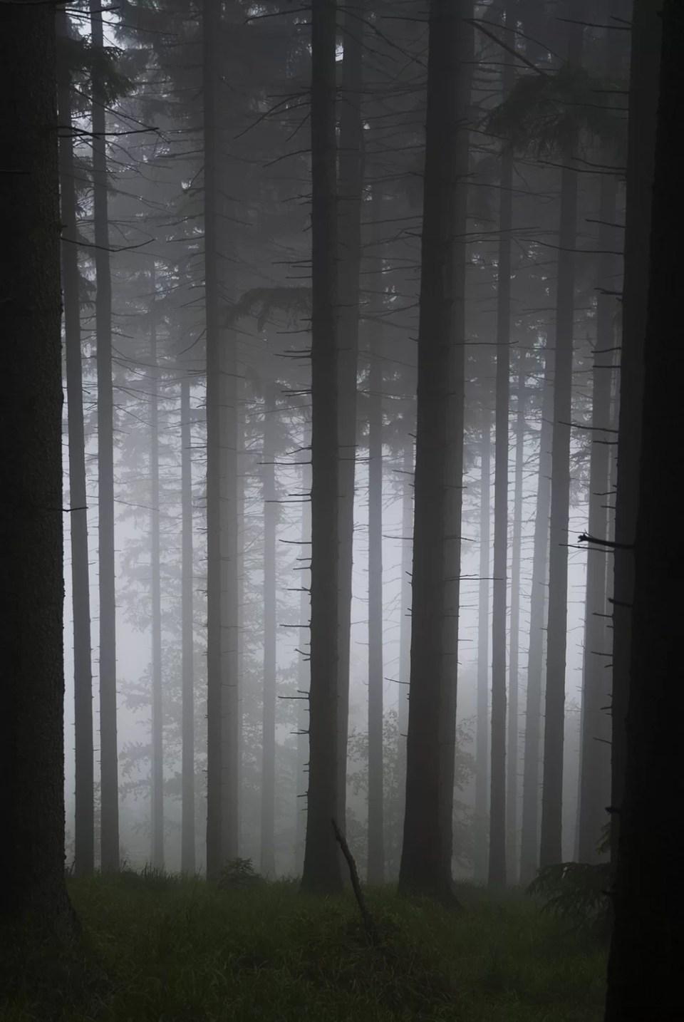 Śnieżnik góry, lasy