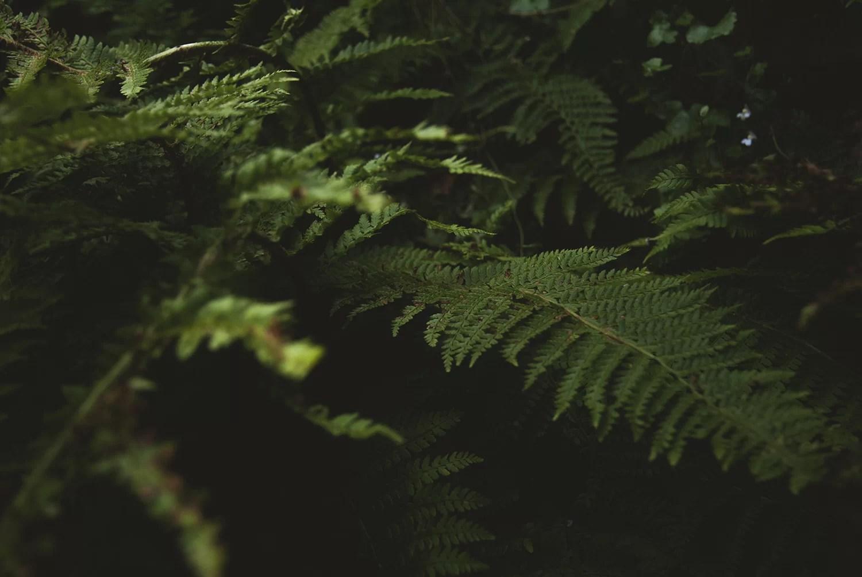 Paproć natura fotografia