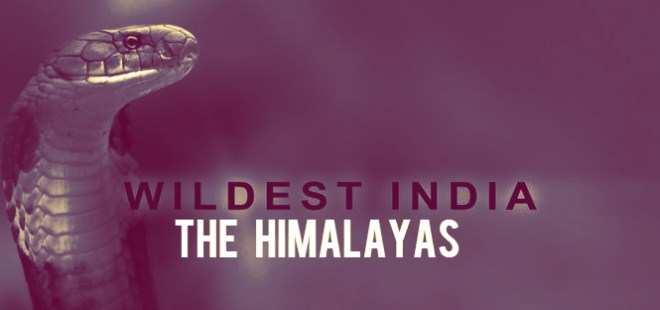 Wildest India The Himalayas Cover Picture