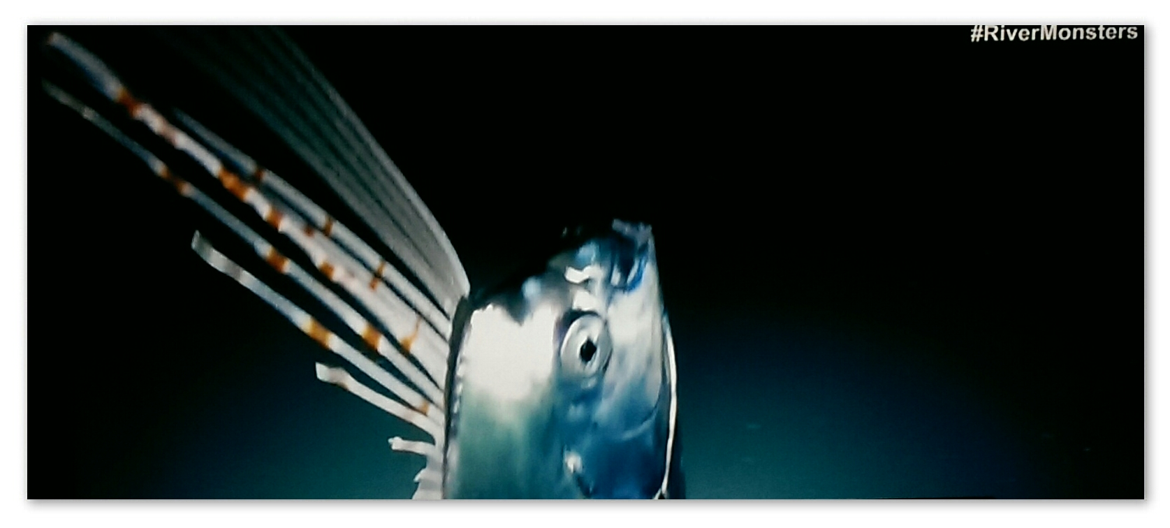 Image of an Oarfish from the River Monsters episode 'Deep Sea Demon'