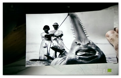 A picture of a large sawfish from in the River Monsters episode Killer Sharks and Rays.