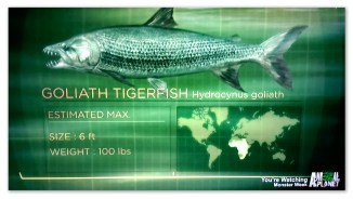 Image of the Goliath Tigerfish