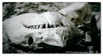 Image of a shark head in a Mexican 'shark cemetery'